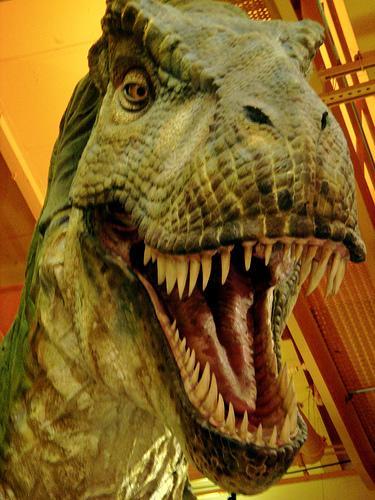 Are You A Social Media Dinosaur