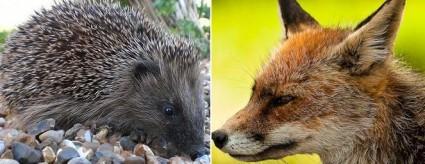 B2B Marketer Hedgehog or Fox